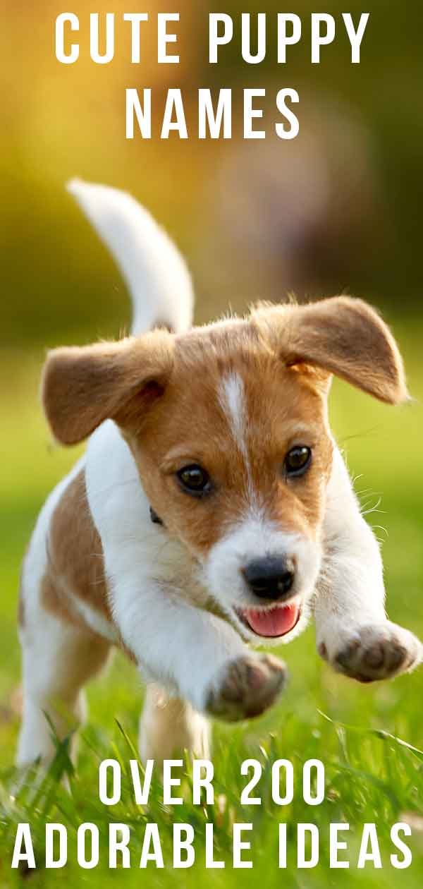 Cute Puppy Names - Over 200 Adorable Ideas For Naming Your Dog