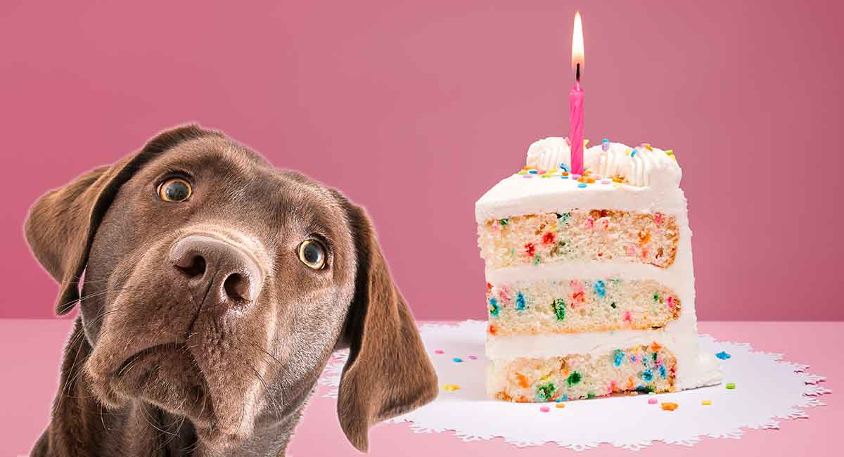 Astounding Dog Birthday Cake Recipes From Easy To Fancy Bakes Personalised Birthday Cards Veneteletsinfo