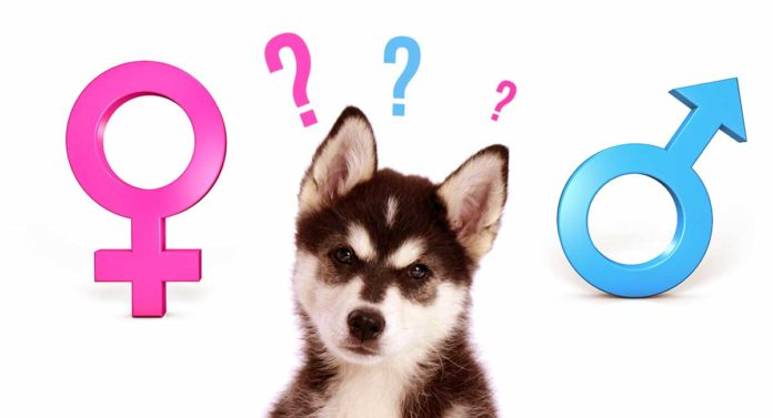 male or female dog