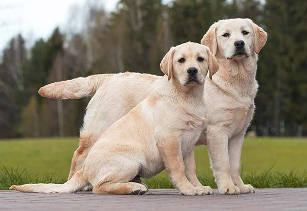 best female names for labradors