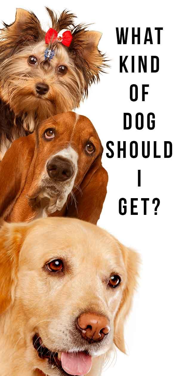 what kind of dog should I get