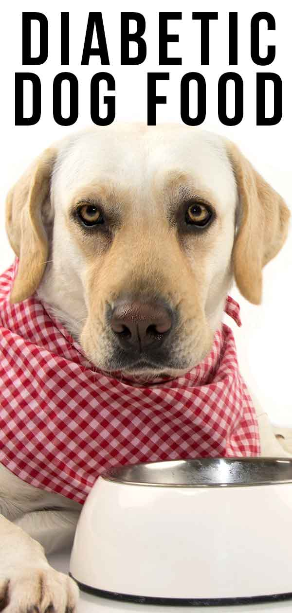 Diabetic dog food – Top choices for dogs with diabetes