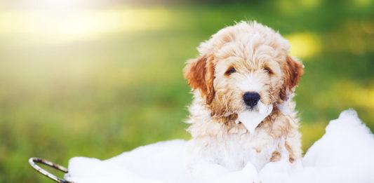 Best Organic Dog Shampoo