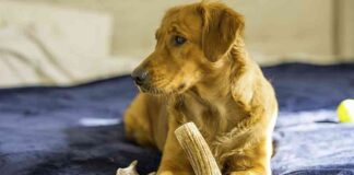 are antlers safe for dogs