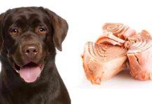 can dogs eat tuna
