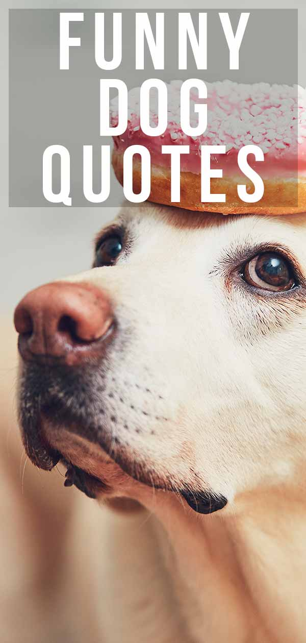 Funny Dog Quotes From the Quirky to the Hilarious
