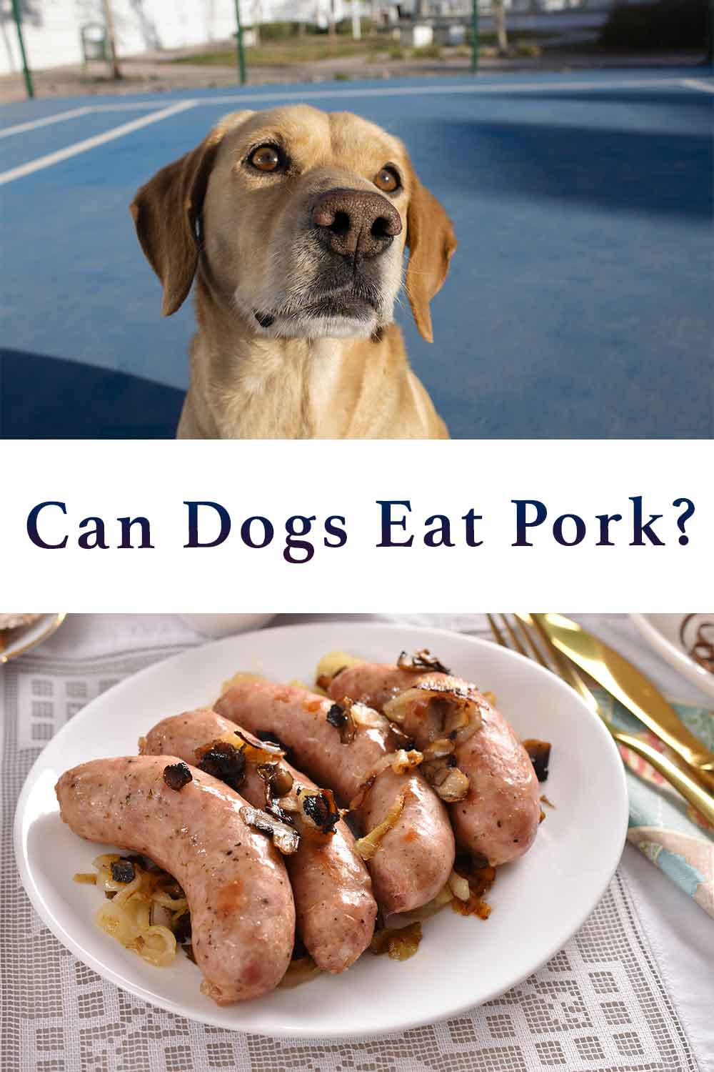 can dogs eat pork