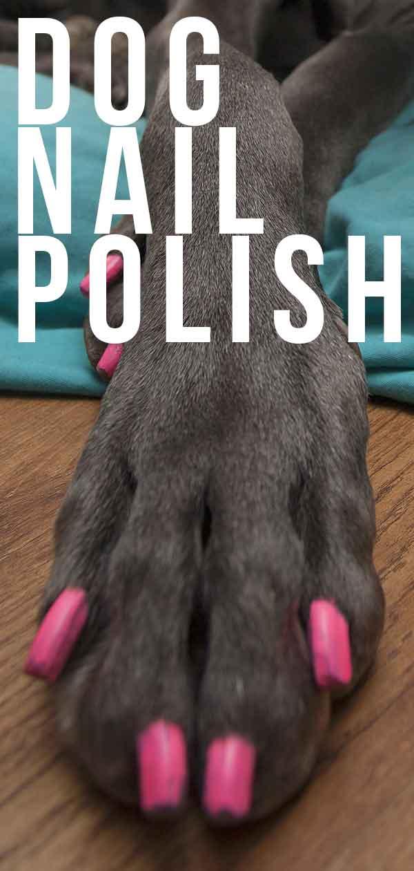 dog nail polish