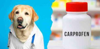 carprofen for dogs