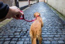 best dog leash