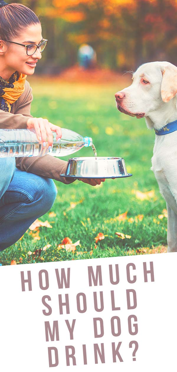 How Much Water Should A Dog Drink - A Daily Water Guide