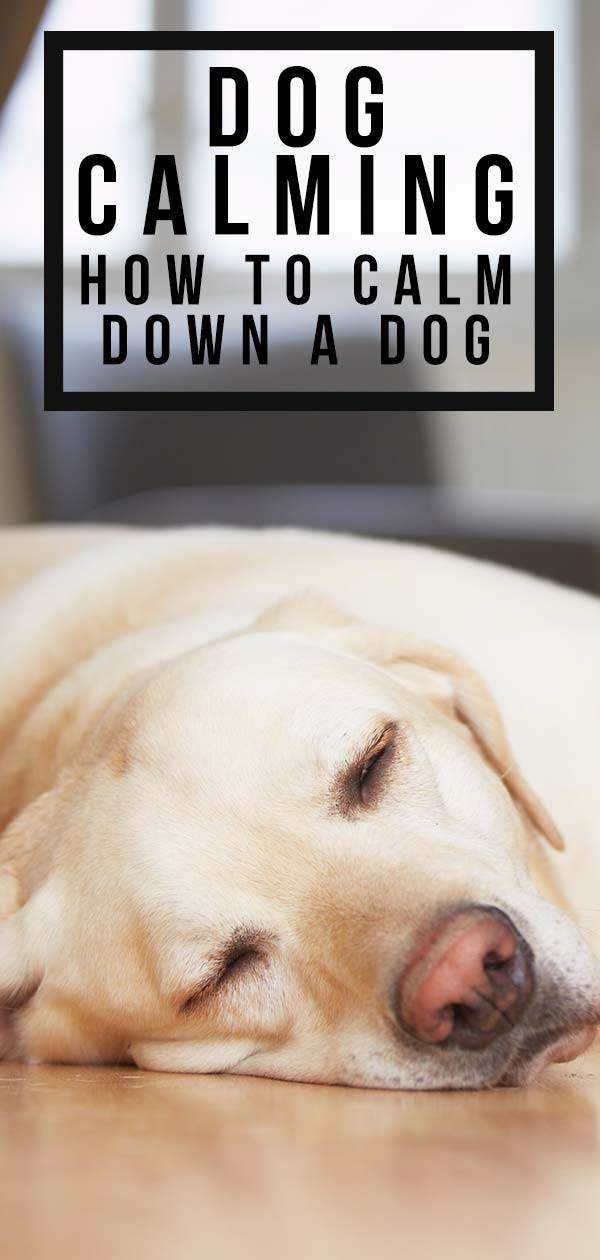 how to calm down a dog