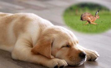 do dogs dream