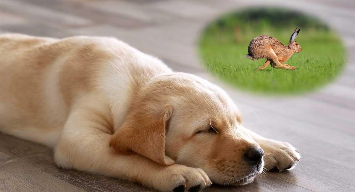 பொதுஅறிவு - கேள்வியும் பதிலும் (தொடர்) Do-Dogs-Dream-LS-long