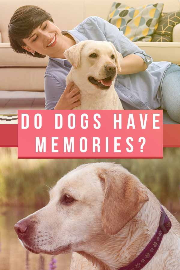 do dogs have memories