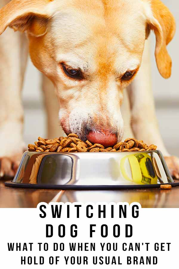 switching dog food