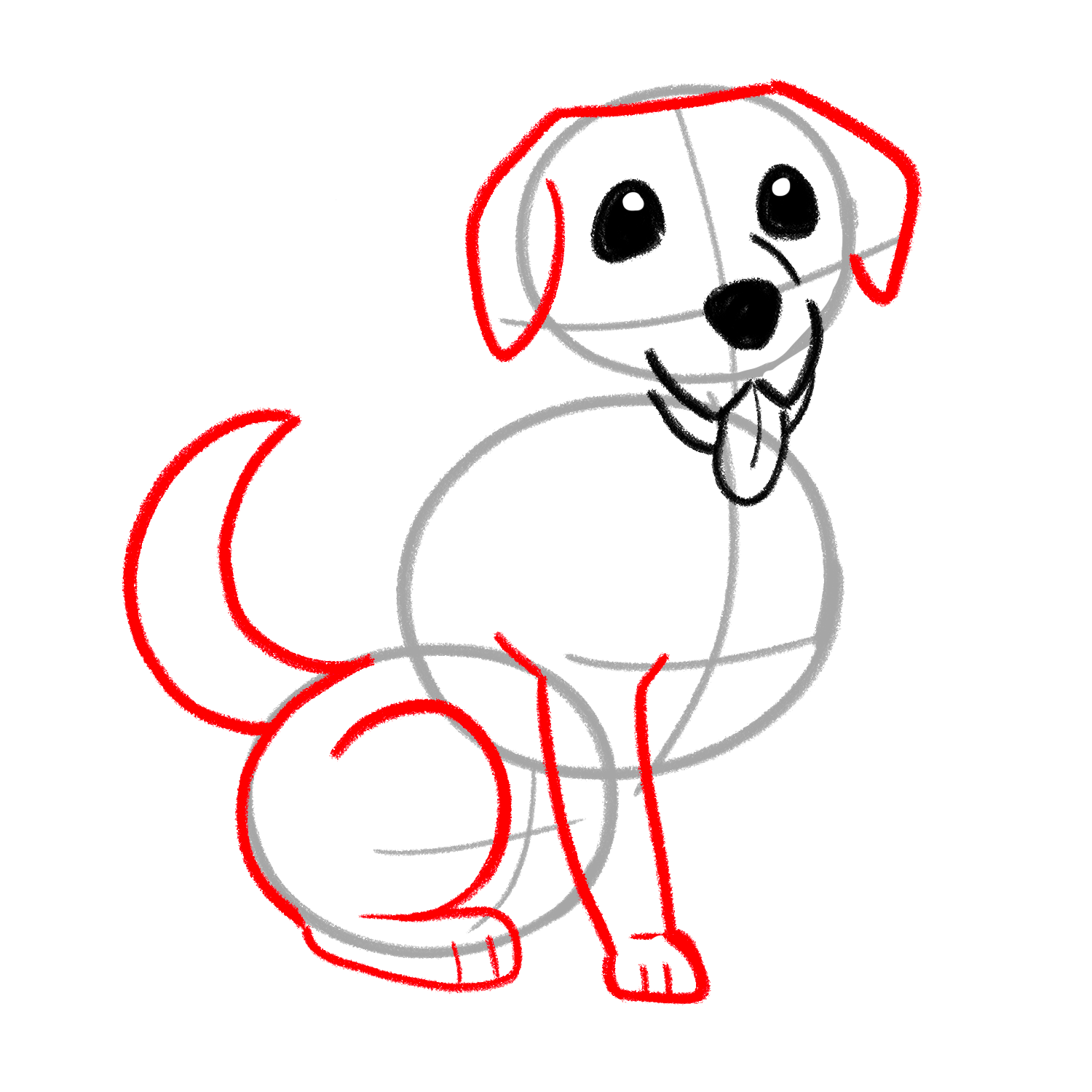 How to draw a Labrador stage 03