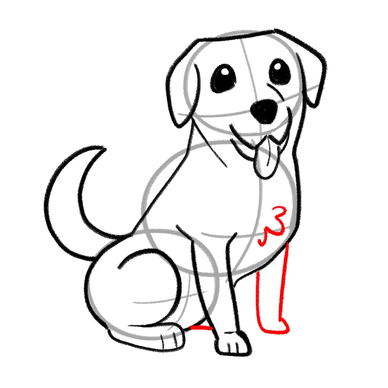 How to draw a Labrador step 05