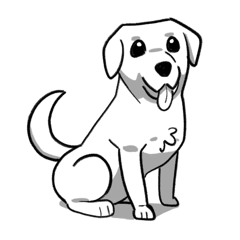 How to draw a Labrador step 08