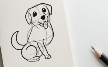 How to draw a Labrador