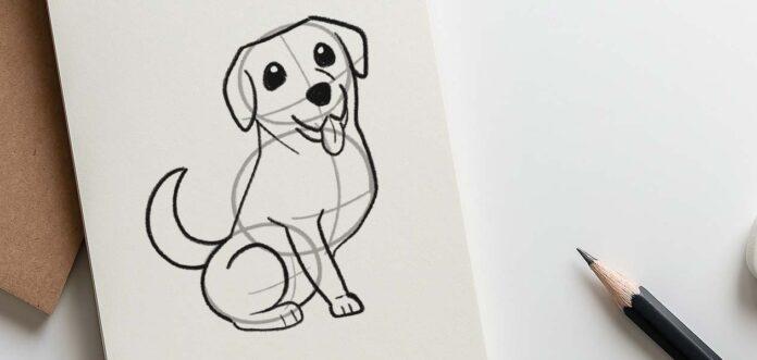 How to draw a Labrador