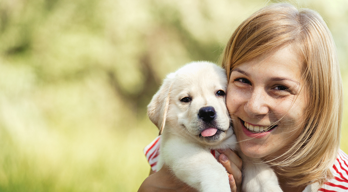 Advice On Caring For Your Labrador Puppy