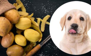 can dogs eat potatoes