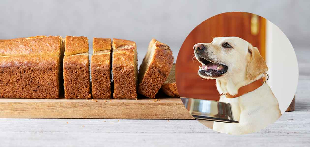 Can Dogs Eat Bread Or Should It Stay On