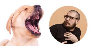 labrador barking