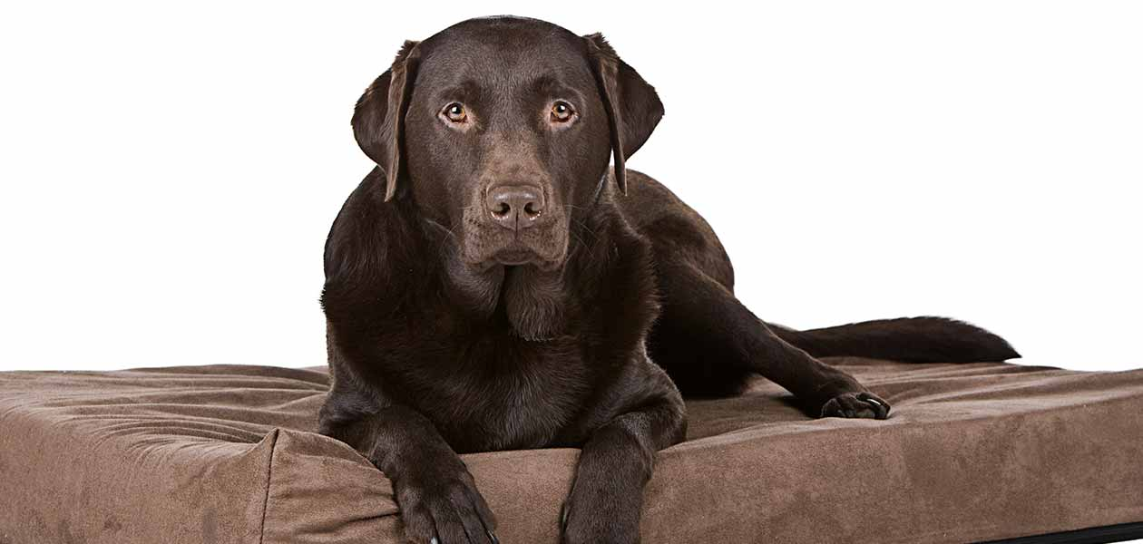 Best Memory Foam Dog Bed Top Options For Comfort And Support