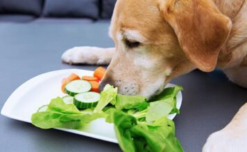 what vegetables are good for labradors