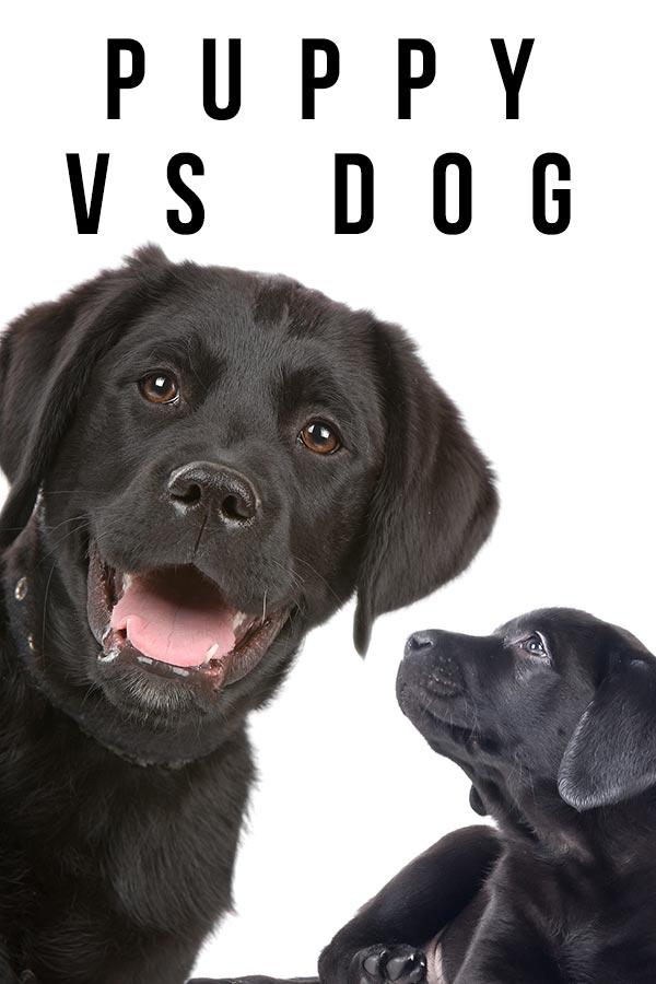 puppy vs dog