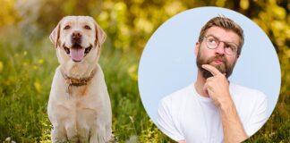 what class of dog is a labrador retriever