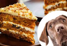 can dogs eat carrot cake