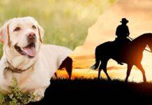southern dog names