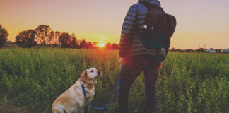 what is a dog warden