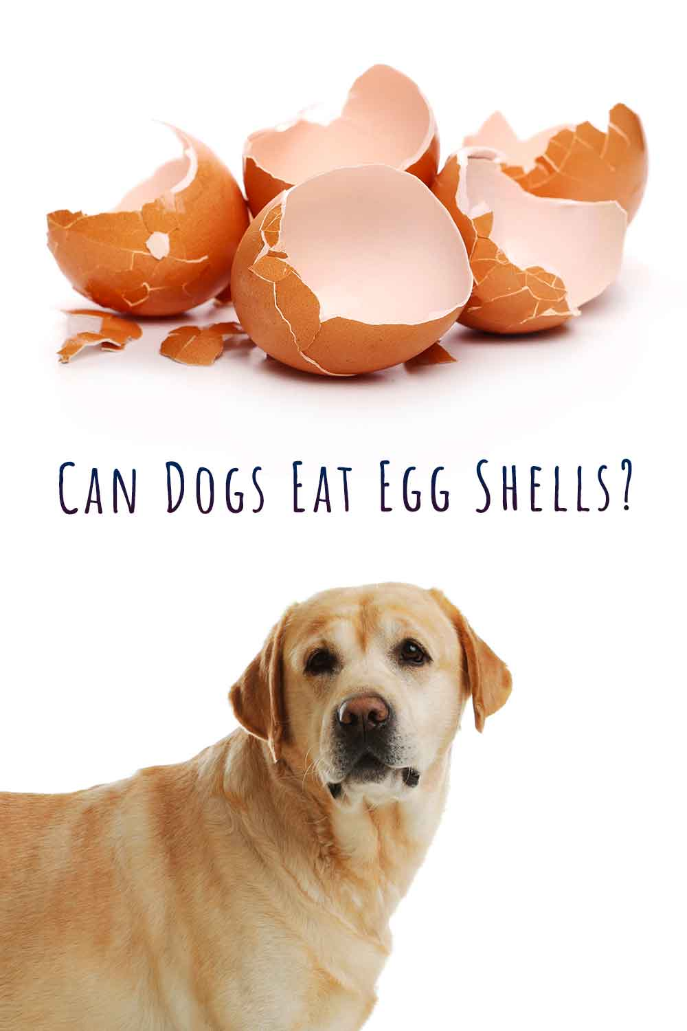 can dogs eat egg shell