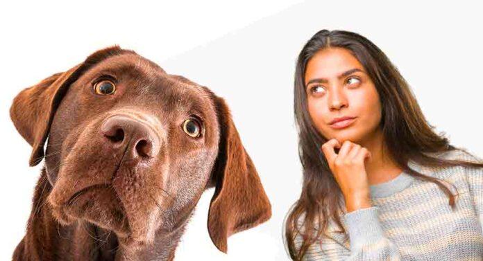 pros and cons of neutering a labrador