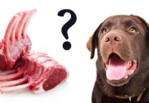 can dogs eat lamb bones